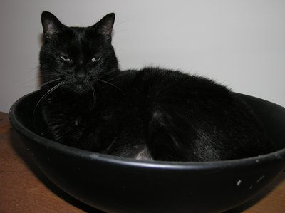 data/images/the-cats/cat-in-bowl.JPG