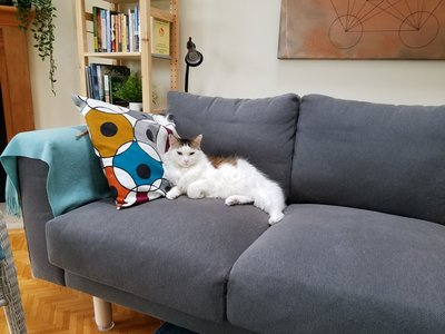 data/images/the-cats/cat-on-sofa.jpg