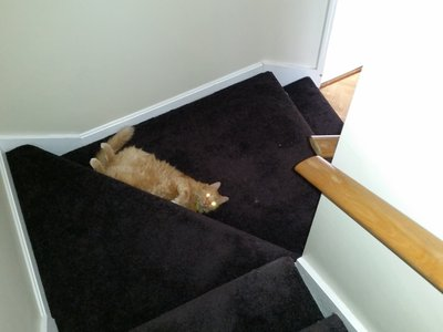 data/images/the-cats/cat-on-stairs.jpg