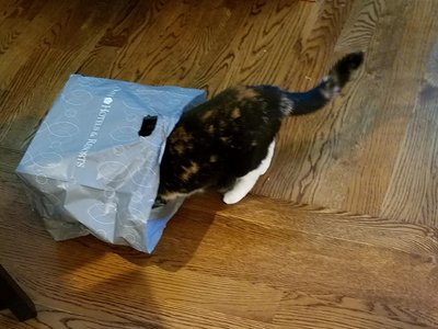 data/images/the-cats/izzy-in-bag.jpg